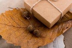 布朗荚,在一片干燥叶子的胶囊作为秋天背景 免版税库存图片