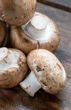 布朗蘑菇蘑菇 免版税库存图片