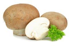 布朗蘑菇 库存照片