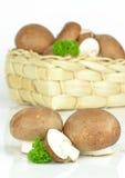 布朗蘑菇 免版税库存图片