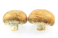 布朗蘑菇 图库摄影