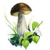 布朗蘑菇paited与水彩 免版税库存图片