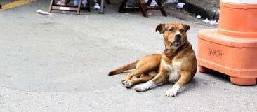 布朗街道狗 免版税库存照片
