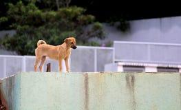 布朗街道狗 免版税库存图片