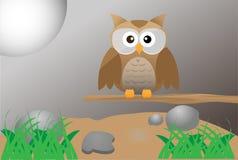布朗逗人喜爱的猫头鹰 免版税库存图片