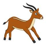 布朗逗人喜爱的羚羊赛跑 库存照片