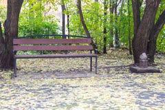 布朗长凳在秋天城市公园 黄色下落的地方教育局背景  免版税库存照片
