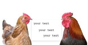 布朗鸡和黑红色公鸡 免版税库存照片