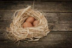 布朗鸡在秸杆的蛋谎言 库存照片