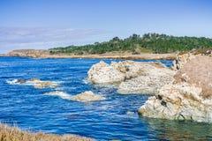 布朗鹈鹕基于岩石的,点罗伯斯状态自然储备 库存图片