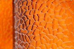 布朗,橙色玻璃背景 免版税图库摄影