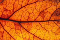 布朗,红色和橙色叶子坚固性表面结构极端宏观特写镜头照片 免版税库存照片