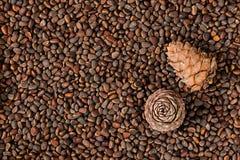 布朗,雪松锥体,坚果,杉木,西伯利亚人,健康,自然,食物 图库摄影
