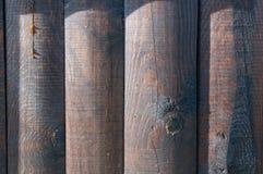 布朗绘了森林 库存图片