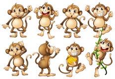 布朗猴子用不同的行动 免版税库存图片