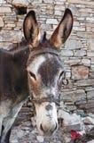 布朗驴 免版税库存照片