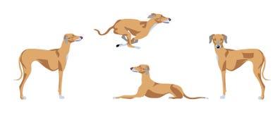 布朗azawakh狗传染媒介例证 向量例证