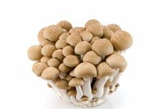 布纳采蘑菇shimeji 库存图片