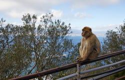 直布罗陀,问题的兴趣在英国国外区域上在伊比利亚半岛的南部的唾液, 图库摄影