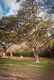 布莱德河峡谷南非 图库摄影