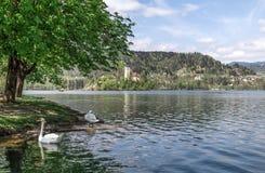 布莱德湖在斯洛文尼亚,春天2015年 库存照片