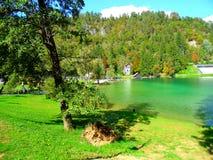布莱德湖天蓝色的水  免版税库存图片