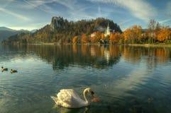 布莱德湖,城堡流血和教会圣小游艇船坞-秋天图片 库存图片