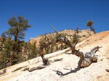 布莱斯峡谷国家公园犹他,美国 库存图片