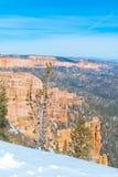 布赖斯峡谷国家公园在冬天 库存照片
