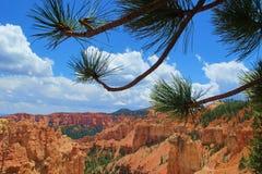 布赖斯峡谷通过树 免版税库存照片