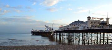 布赖顿码头海鸥 免版税库存图片