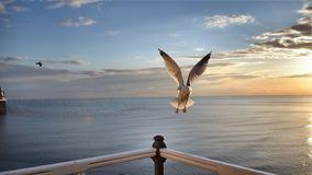 布赖顿码头carrusel 免版税图库摄影