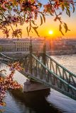 布达佩斯,匈牙利-春天在有美丽的自由桥梁的布达佩斯在有朝阳和樱花的河多瑙河 免版税库存图片