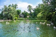 布达佩斯,匈牙利- 2016年7月26日:有鹈鹕和水禽的其他种类的一个池塘在布达佩斯动物园和植物园的 免版税图库摄影