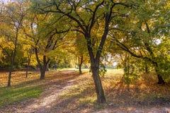 布达佩斯,匈牙利- 2015年10月27日:秋天有直接阳光的颜色公园 Citadella地区在布达佩斯,匈牙利 库存照片