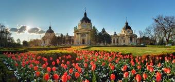 布达佩斯-有花的, Szechenyi温泉,匈牙利春天全景 图库摄影