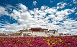 布达拉宫在有花前景的西藏 库存照片