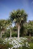 布里坦尼棕榈树 免版税库存图片