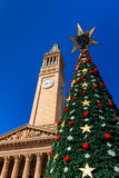 布里斯班市圣诞树和香港大会堂反对蓝色sk 库存照片