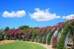 布里斯班庭院 库存图片