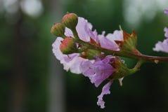 布里斯班植物园 图库摄影
