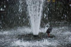 布里斯班植物园 免版税库存图片