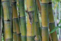 布里斯班植物园 免版税图库摄影