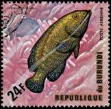 布隆迪共和国-大约1974年:邮票,打印在布隆迪,显示一条鱼孔雀石斑鱼Cephalopholis阿格斯和surgeo 库存图片