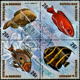 布隆迪-大约1974年:邮票,打印在布隆迪,显示一条鱼:大眼鲷arenatus, Pomacanthus arcuatus, Scarus guacamaia,宙斯 图库摄影