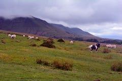 布雷肯比肯斯山,威尔士,英国青山  图库摄影