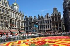 布鲁塞尔地毯花 免版税图库摄影