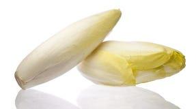布鲁塞尔苦苣生茯查出在白色 免版税库存图片