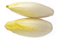 布鲁塞尔苦苣生茯查出在白色 库存照片
