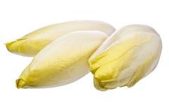 布鲁塞尔苦苣生茯查出在白色 免版税图库摄影